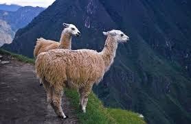 llama-facts