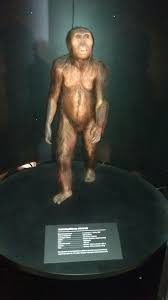lucy-australopithecus-facts