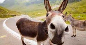 mule-facts