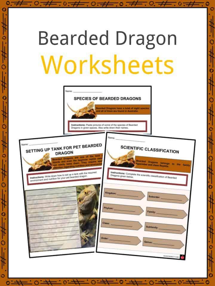 Bearded Dragon Worksheets