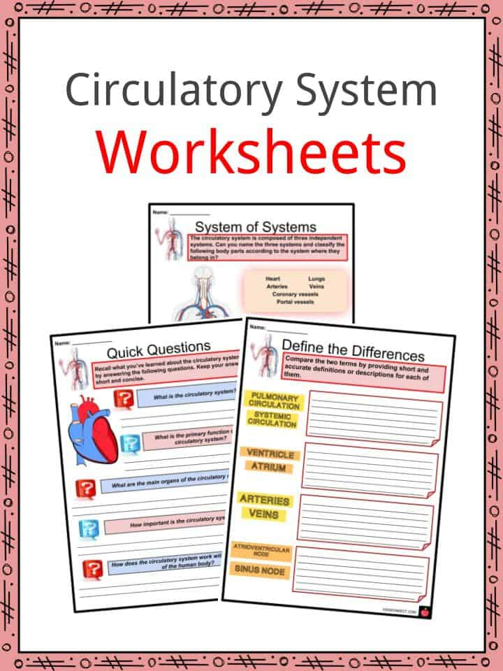 Circulatory System Facts Worksheets Cycle Heartbeat
