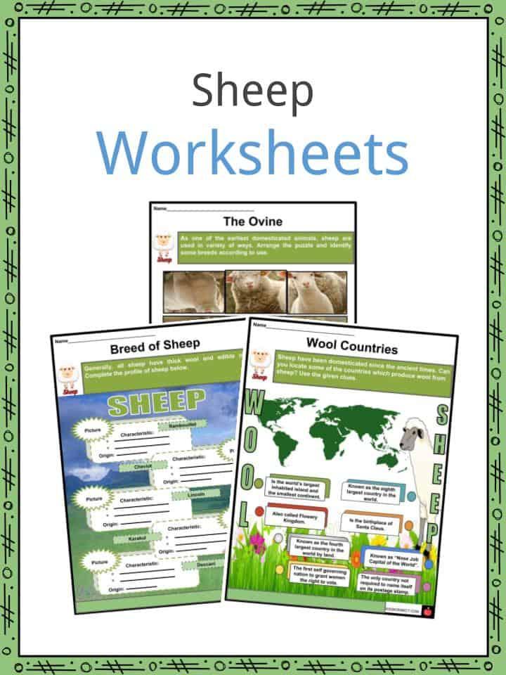 Sheep Worksheets