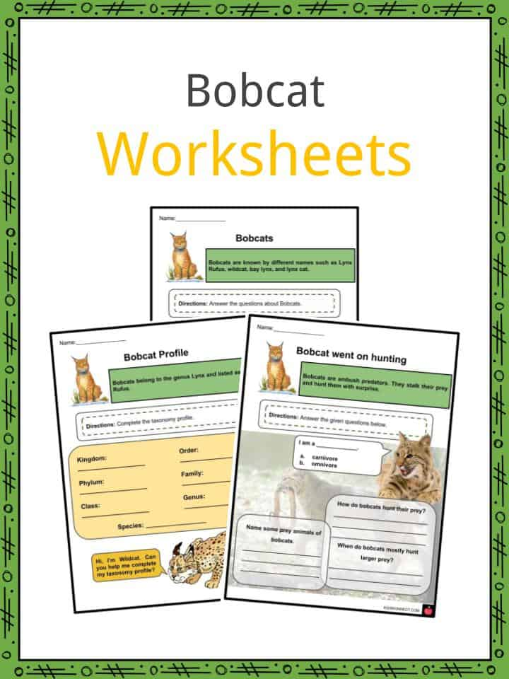 Bobcat Worksheets