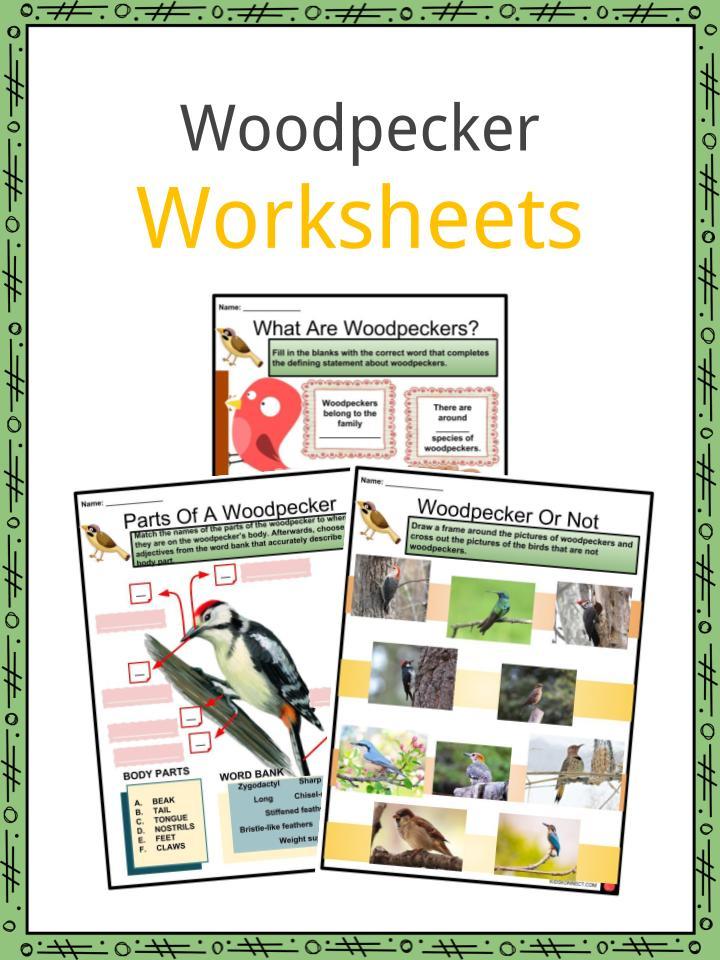 Woodpecker Worksheets