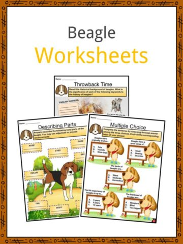 Beagle Worksheets