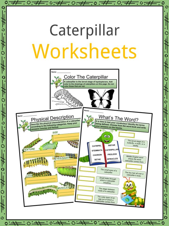 Caterpillar Worksheets