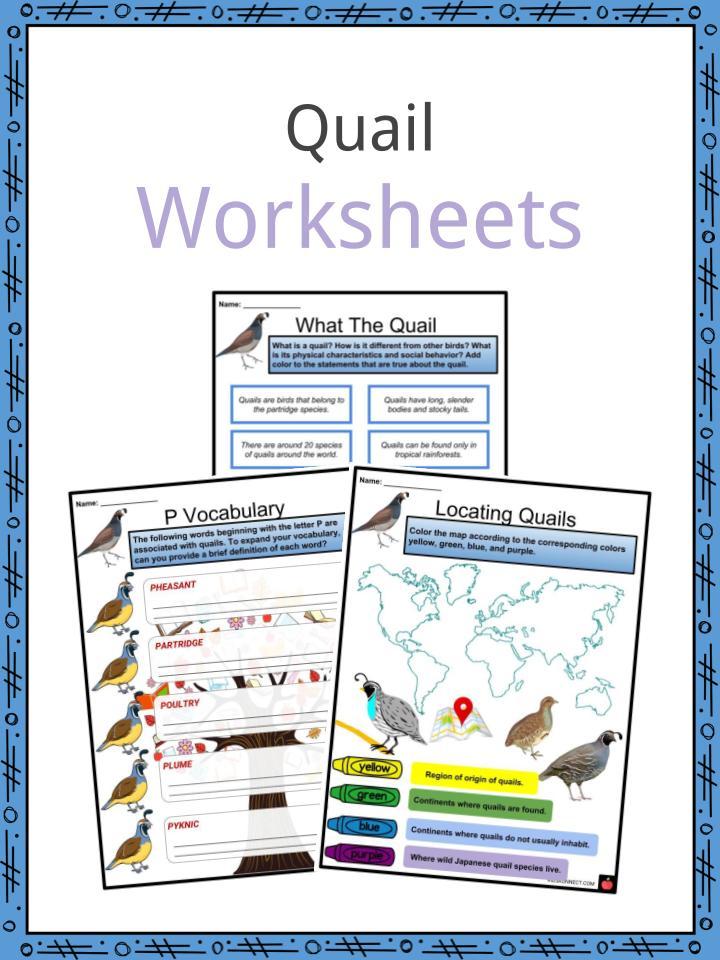 Quail Worksheets