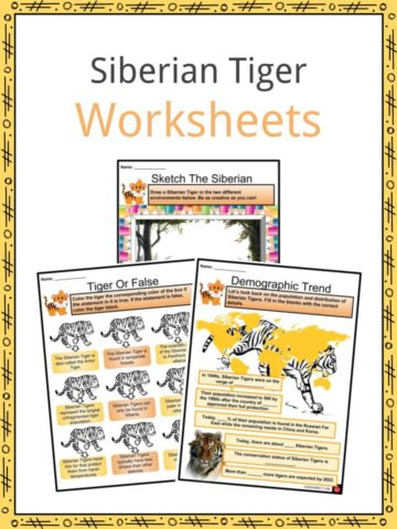 Siberian Tiger Worksheets