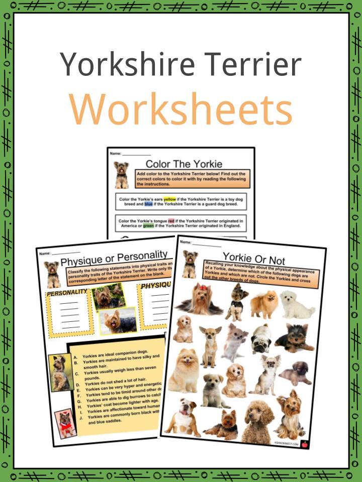 Yorkshire Terrier Worksheets