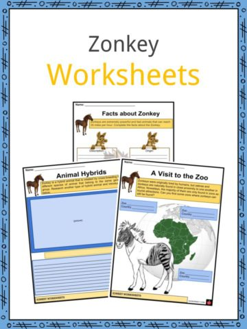 Zonkey Worksheets