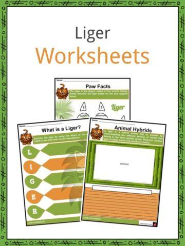 Liger Worksheets