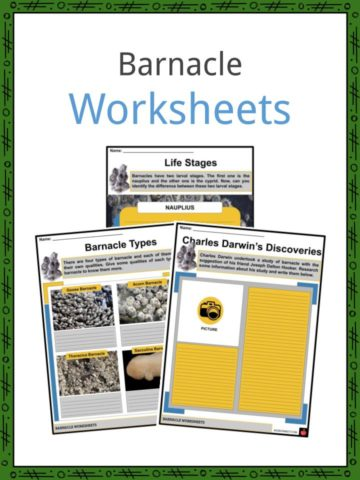 Animal Habitat Worksheet For Kids 3 Worksheets Kindergarten Animals likewise  furthermore animal adaptations worksheets 4th grade moreover  together with  further Adaptations of plants and animals  games  worksheets besides Arctic Animal Adaptations Worksheets Animals Free Printable moreover Adaptations Worksheets For Grade Activities Animal Free in addition Needs Of Animals Worksheet For De Pdf Wild Worksheets Animal as well Animal Habitat Kindergarten Worksheets For Animals And Their Forest in addition  together with animal adaptations worksheets – beautilife info in addition animal adaptations worksheets 4th grade in addition  together with  additionally Animal Adaptations For Kids Worksheets Free Grade Math Habitat High. on animal adaptation worksheets for kids