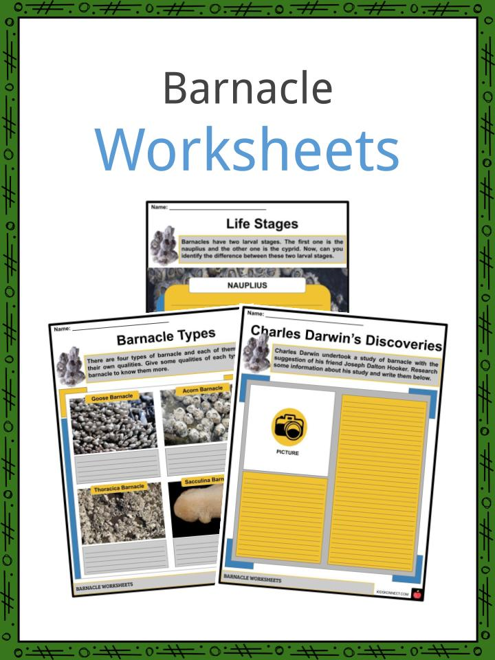 Barnacle Worksheets