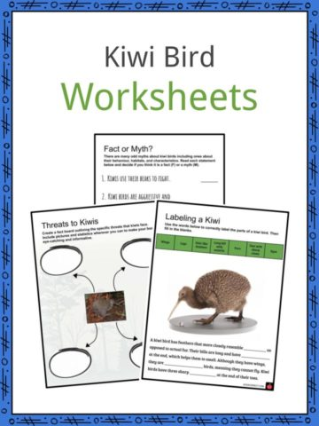 Kiwi Bird Worksheets