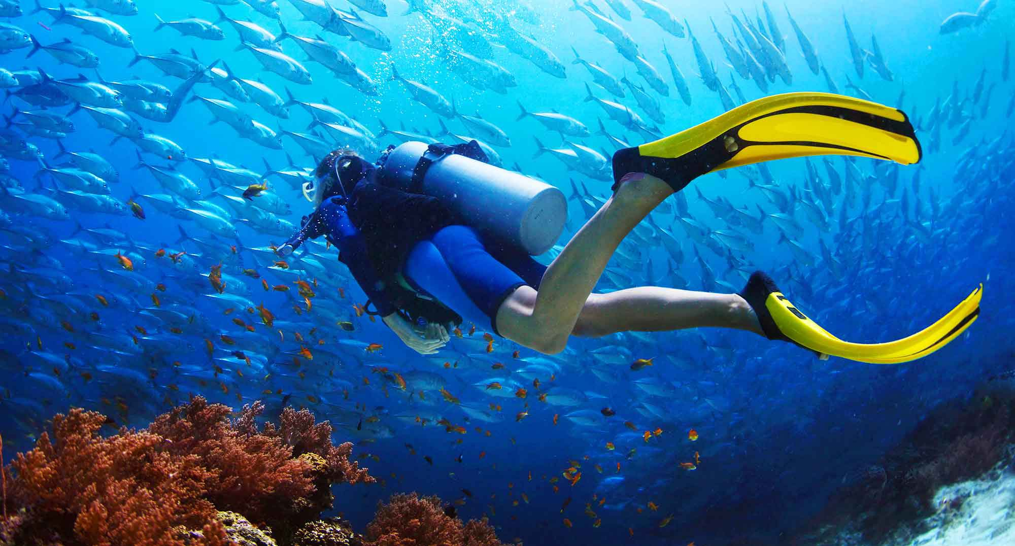 SCUBA Facts, Worksheets & The World Of Scuba For Kids