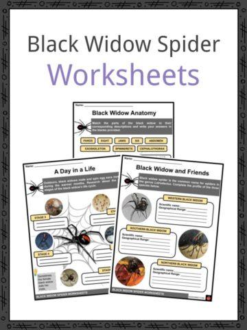 Black Widow Worksheets