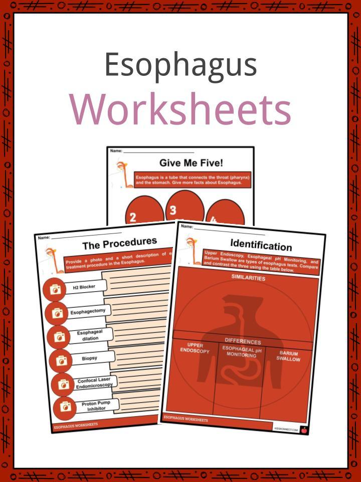 Esophagus Worksheets