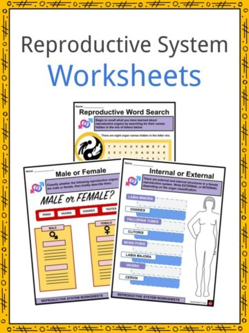 Reproductive System Worksheets