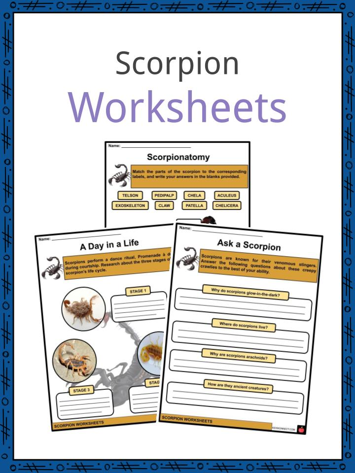 Scorpion Worksheets
