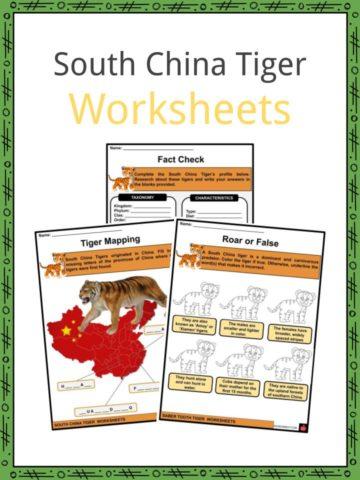 South China Tiger Worksheets