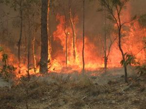 bushfires-facts