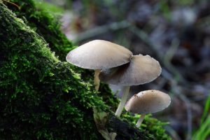 fungi-facts