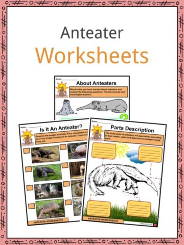 Anteater Worksheets