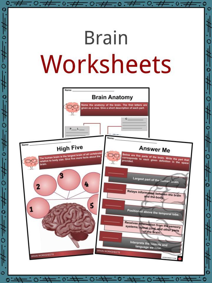 Brain Worksheets