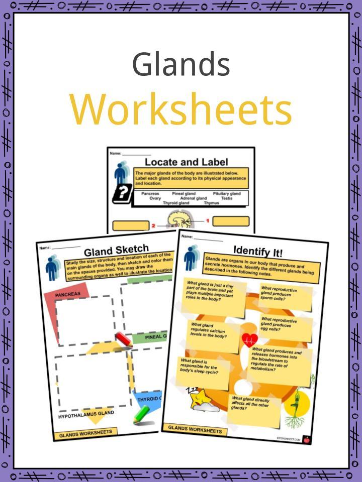 Glands Worksheets