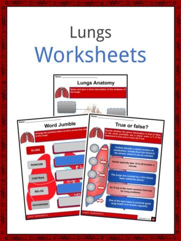 Lungs Worksheets