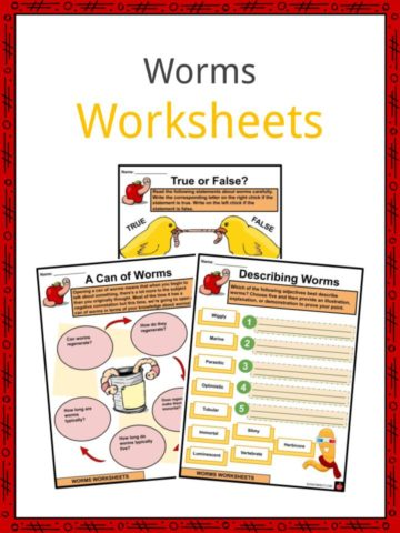 Worms Worksheets