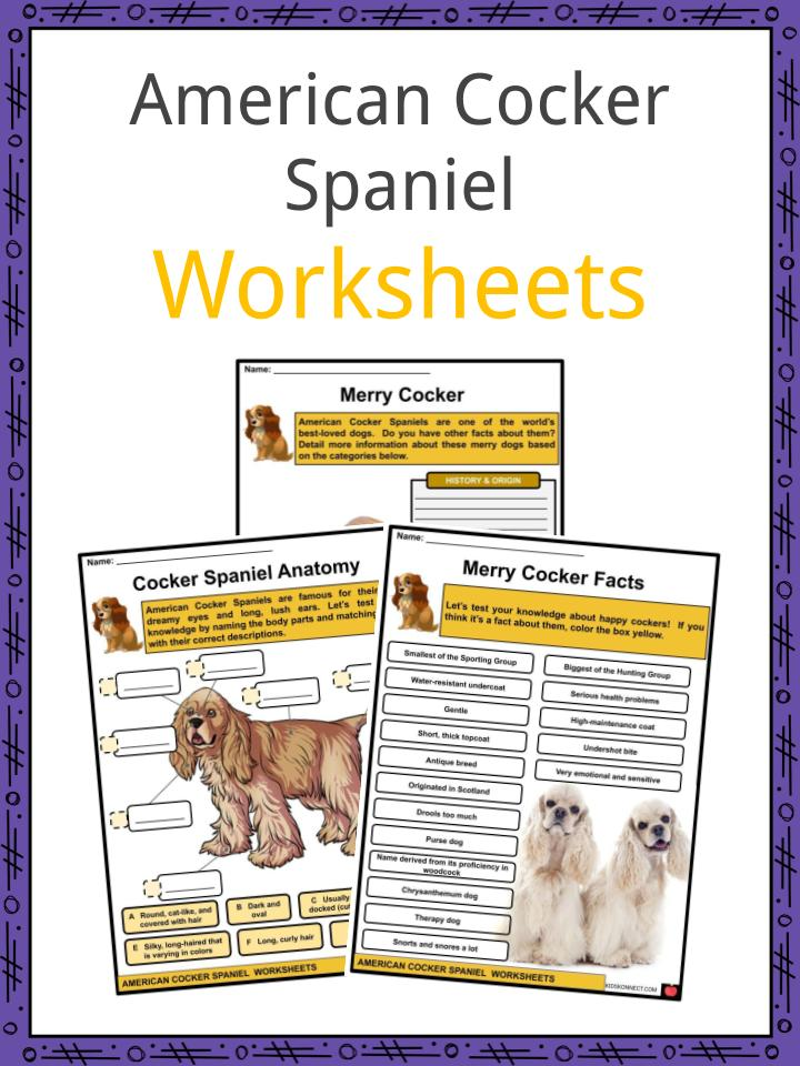 American Cocker Spaniel Worksheets