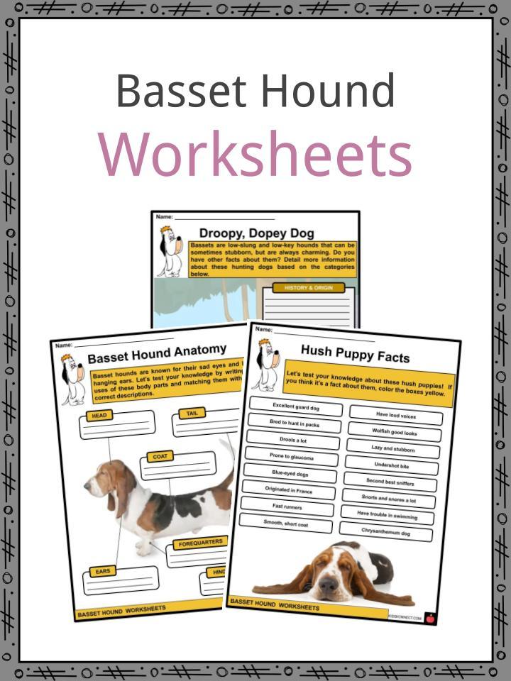 Basset Hound Worksheets