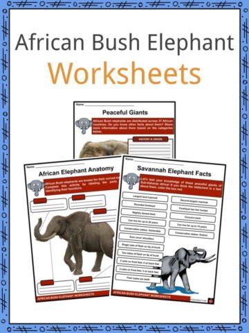 African Bush Elephant Worksheets
