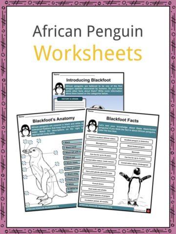 African Penguin Worksheets