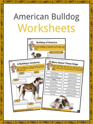 American Bulldog Worksheets
