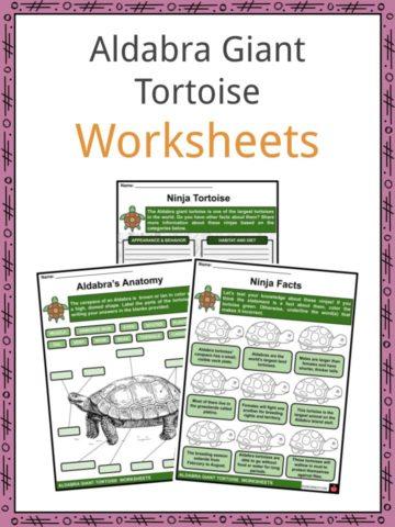 Aldabra Giant Tortoise Worksheets