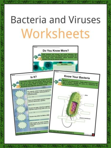 Bacteria and Viruses Worksheets