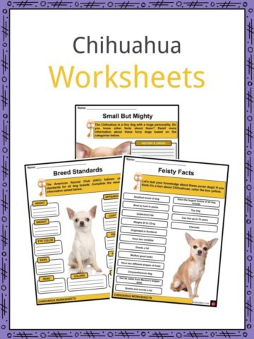 Chihuahua Worksheets