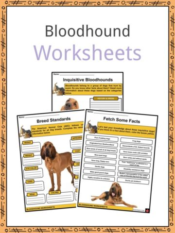 Bloodhound Worksheets