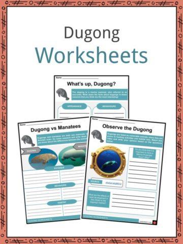 Dugong Worksheets