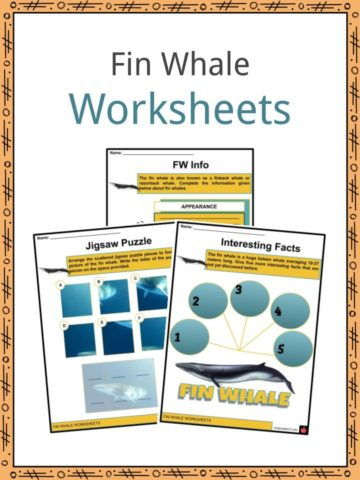Fin Whale Worksheets
