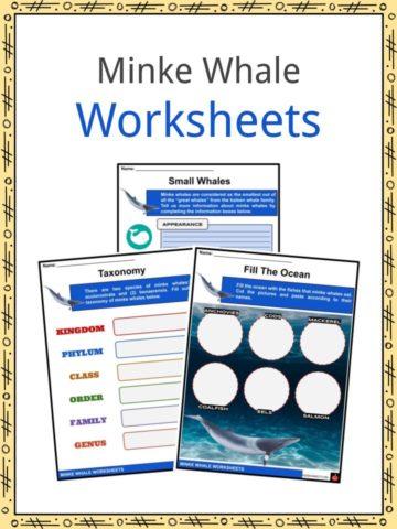 Minke Whale Worksheets