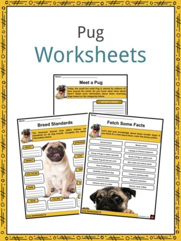Pug Worksheets