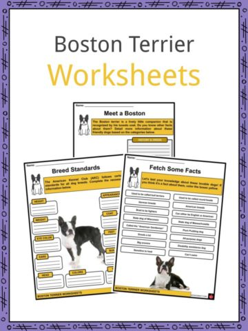 Boston Terrier Worksheets