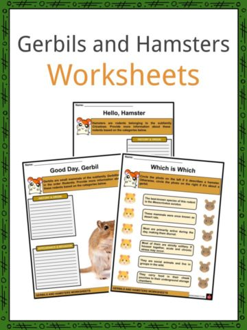 Gerbils and Hamsters Worksheets