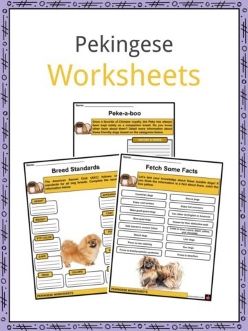 Pekingese Worksheets