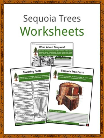 Sequoia Trees Worksheets