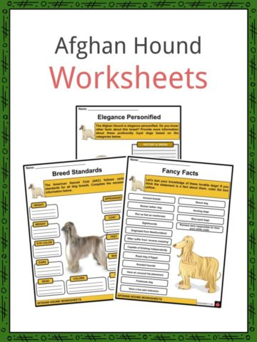 Afghan Hound Worksheets