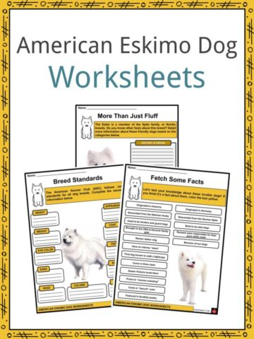 American Eskimo Dog Worksheets
